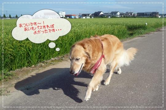 8,12お散歩6