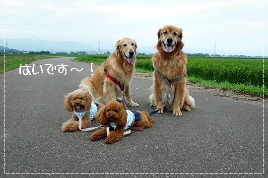 8,13お散歩2