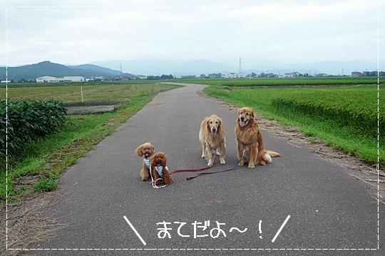 8,13お散歩3