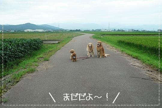 8,13お散歩4