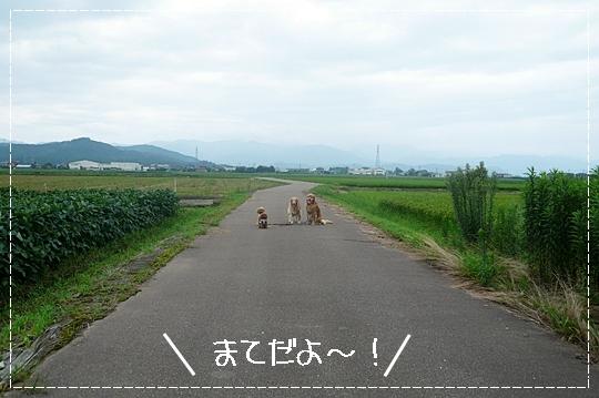 8,13お散歩5
