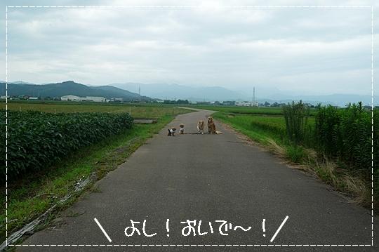 8,13お散歩6