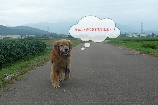 8,13お散歩9