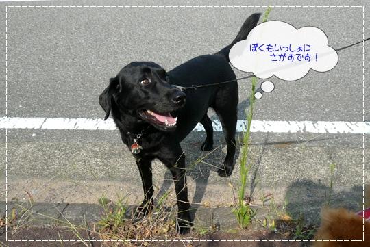 8,19お散歩5