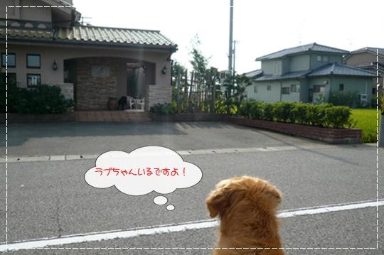8,19お散歩4