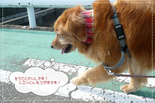 8,19お散歩2