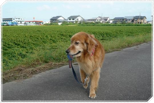 8,22お散歩3