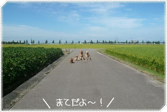 5,25お散歩5