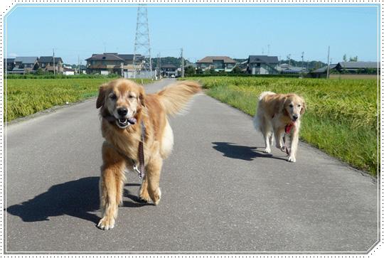 5,25お散歩3