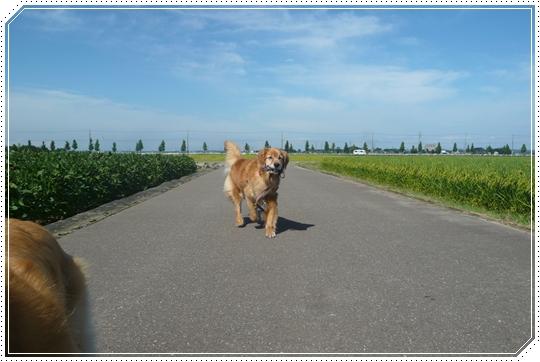 5,25お散歩8