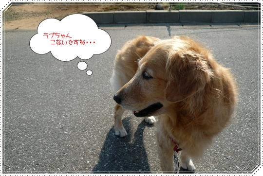8,26お散歩2