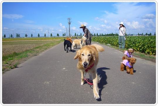 9,10お散歩4