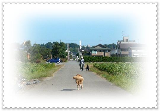9,14お散歩1