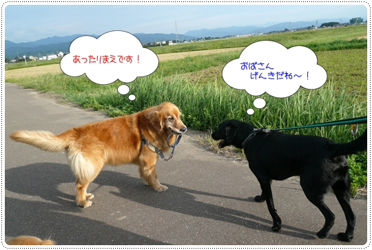 9,14お散歩11