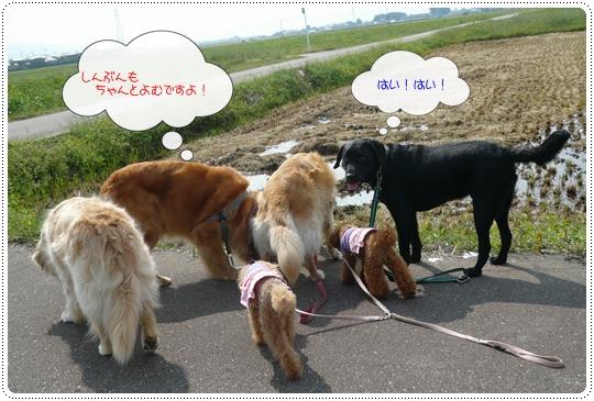 9,16お散歩7