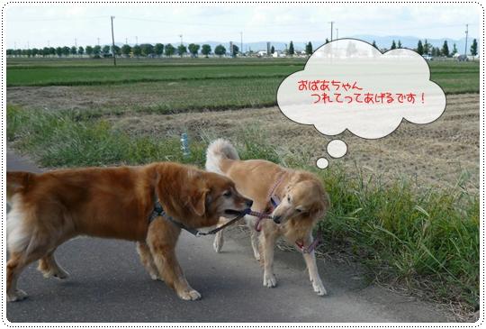 9,20お散歩4