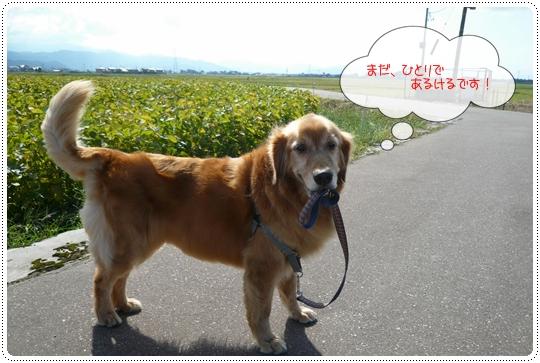 9,20お散歩6