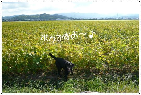 9,20お散歩3