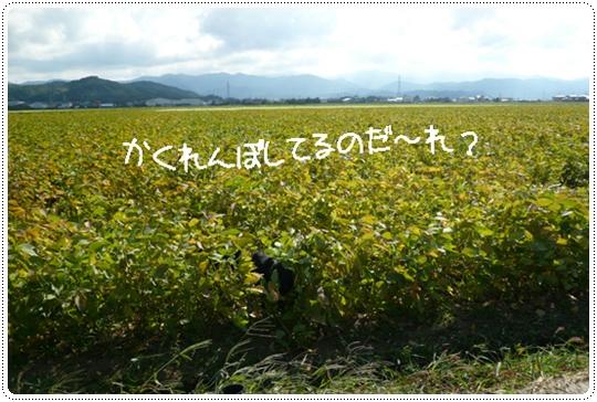 9,20お散歩2