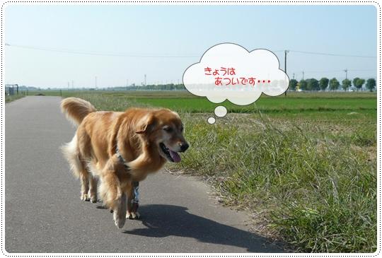 9,24お散歩3
