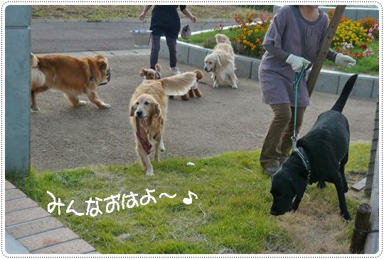 9,26お散歩2