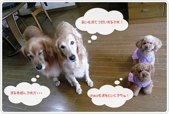 10,4お散歩3