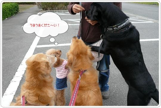 10,5お散歩10