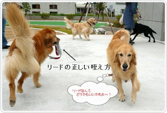 10,7お散歩10