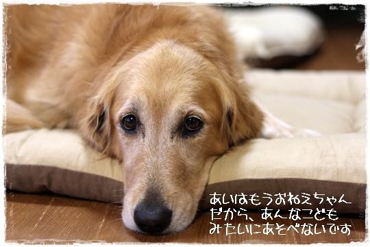 10,8台風6