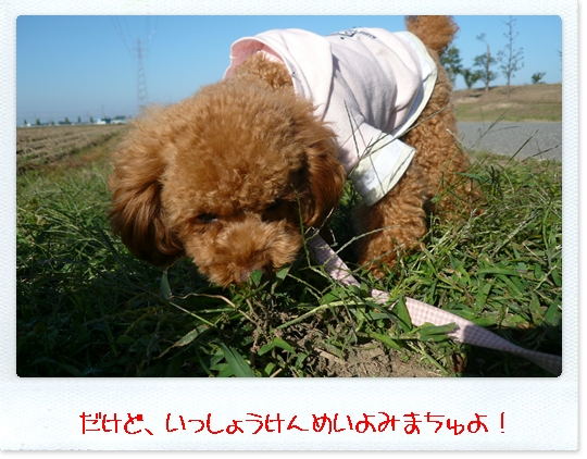 10,23お散歩2