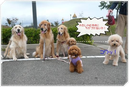 11,3お散歩6