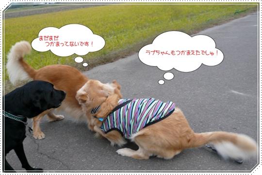 11,13お散歩10