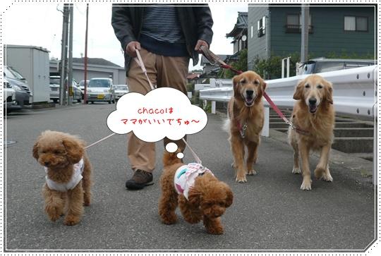 11,15お散歩3