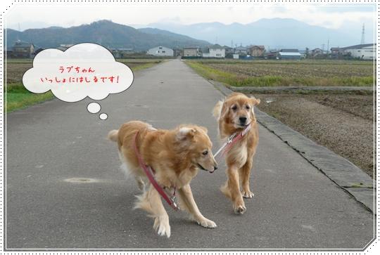 11,20お散歩5