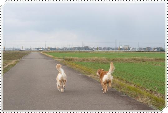 11,20お散歩11