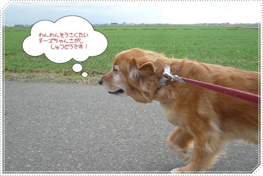 11,21お散歩6