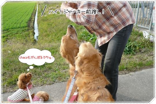 11,21お散歩4