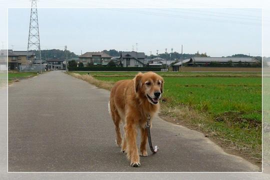 11,22お散歩7