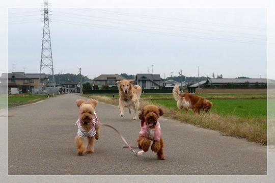11,22お散歩5
