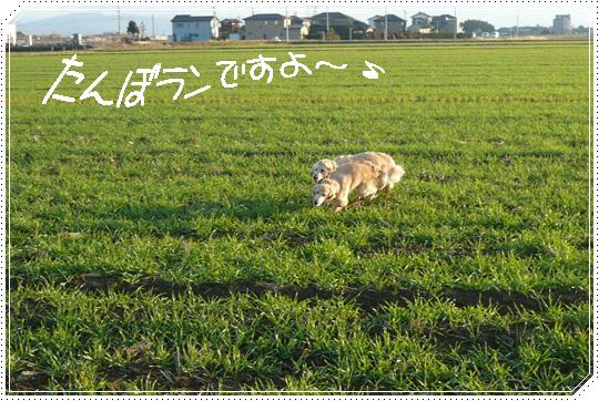 11,25お散歩7
