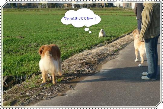 11,25お散歩4