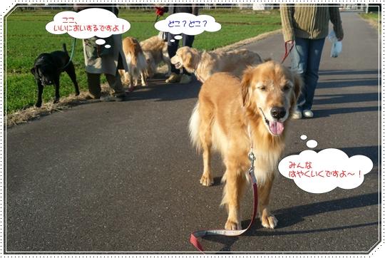 11,25お散歩3
