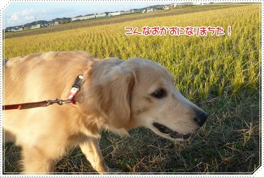 11,25お散歩9