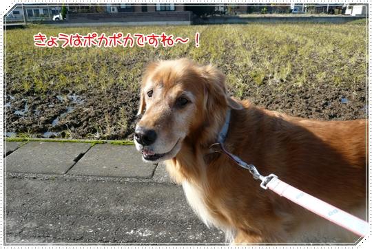 11,26お散歩1