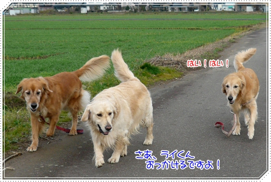 12,11お散歩6