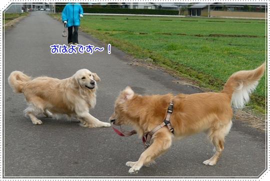12,11お散歩5