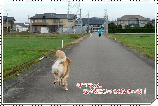 12,11お散歩4