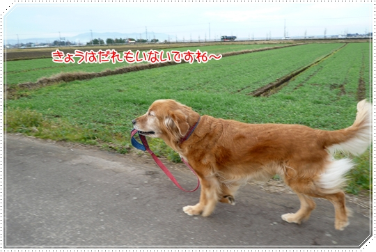 12,11お散歩1