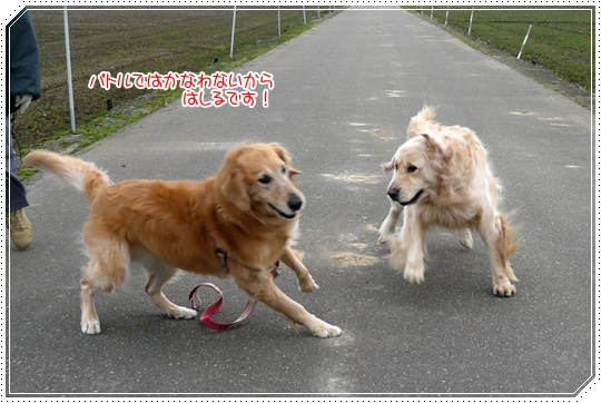 12,13お散歩6
