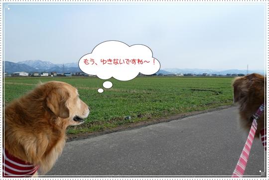 12,23お散歩2